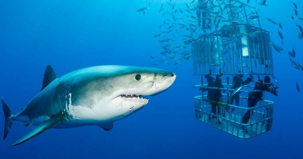 How to Get Your First Client as a New Shark
